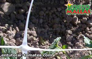 red de tutoreo usada en cultivo de tomate