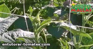 red espaldera utilizada para el soporte de plantas