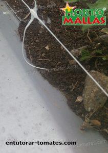 red espaldera hortomallas usada sobre cultivo de tomates