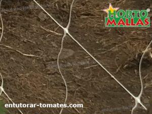 red espaldera instalada para entutorar cultivo tomates