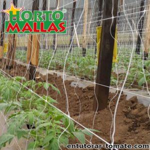 Malla tomatera hortomallas colocada en los cultivos