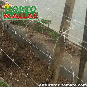 Malla tomatera hortomallas instalada en los cultivos